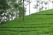 Elegant Tea Garden for Sale at Dooars